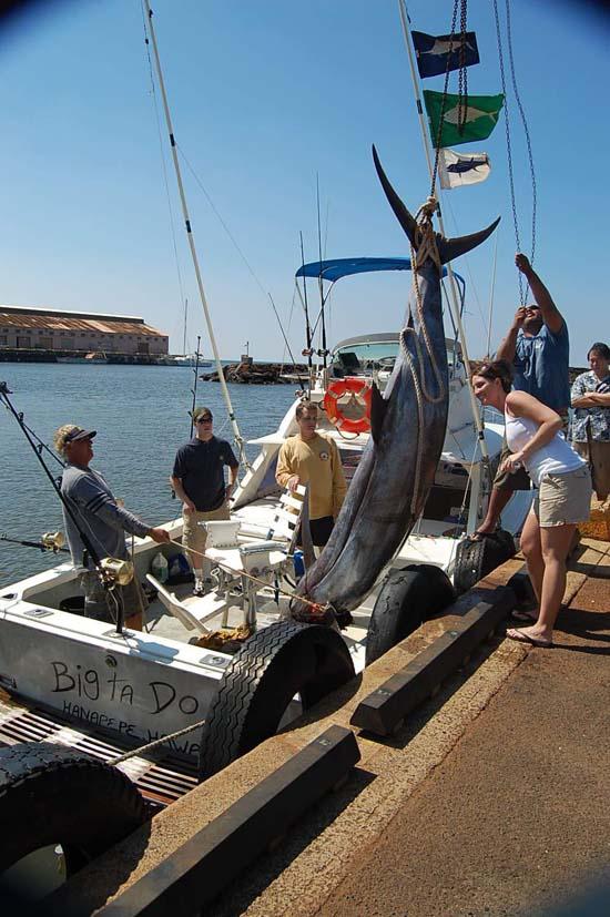 Legendary Marlin caught on Big Ta Do, Port Allen Harbor