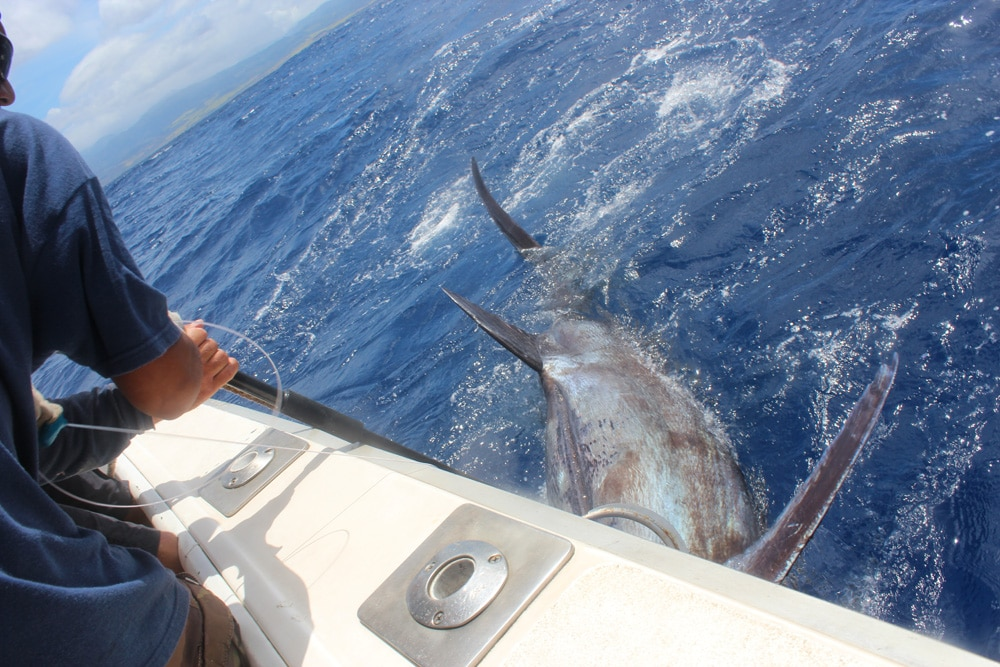 Marlin caught on Kauai